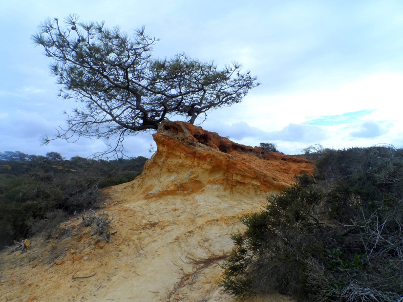 Torrey Pines State Reserve: Home to the rarest pine tree in North America.