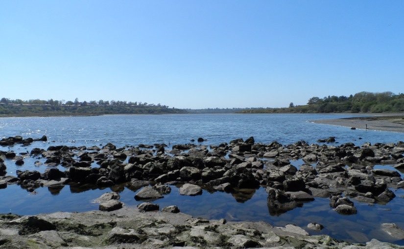 The scenic coastal wetlands in Newport Beach
