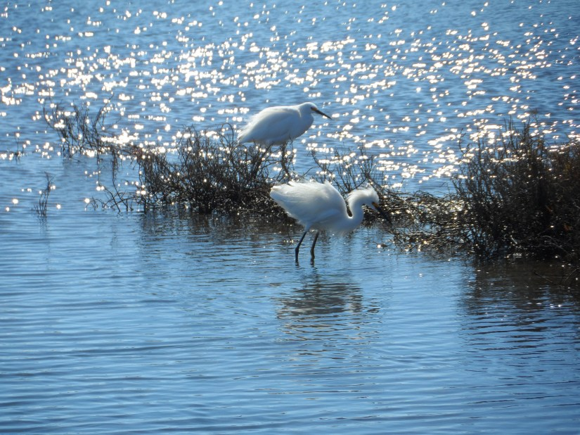 Wandering the Bolsa Chica Wetlands